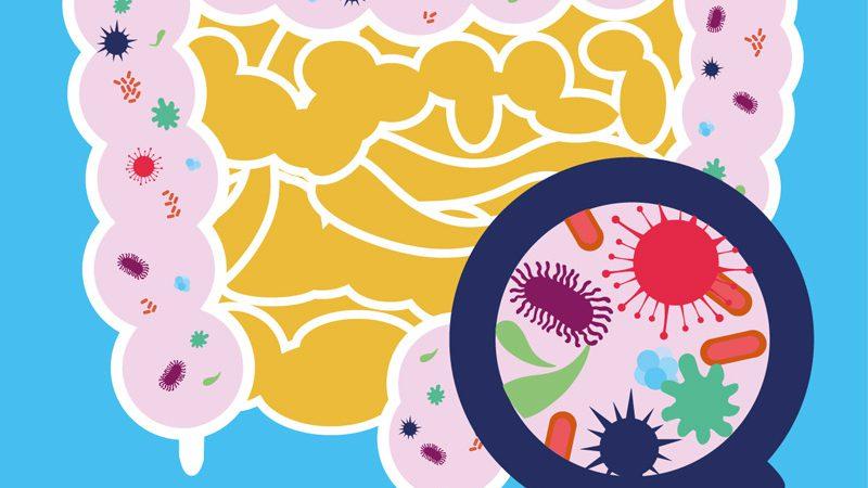 Mikrobiom Milchsäurebakterien YOGUT Joghurtkulturen