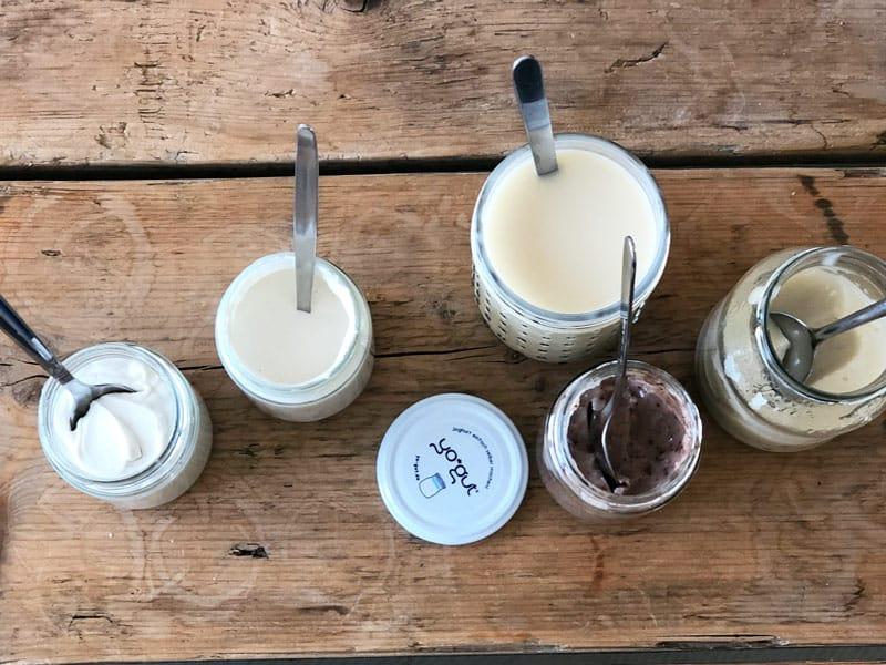 Mit dem Joghurtbereiter veganen Joghurt zubereiten.